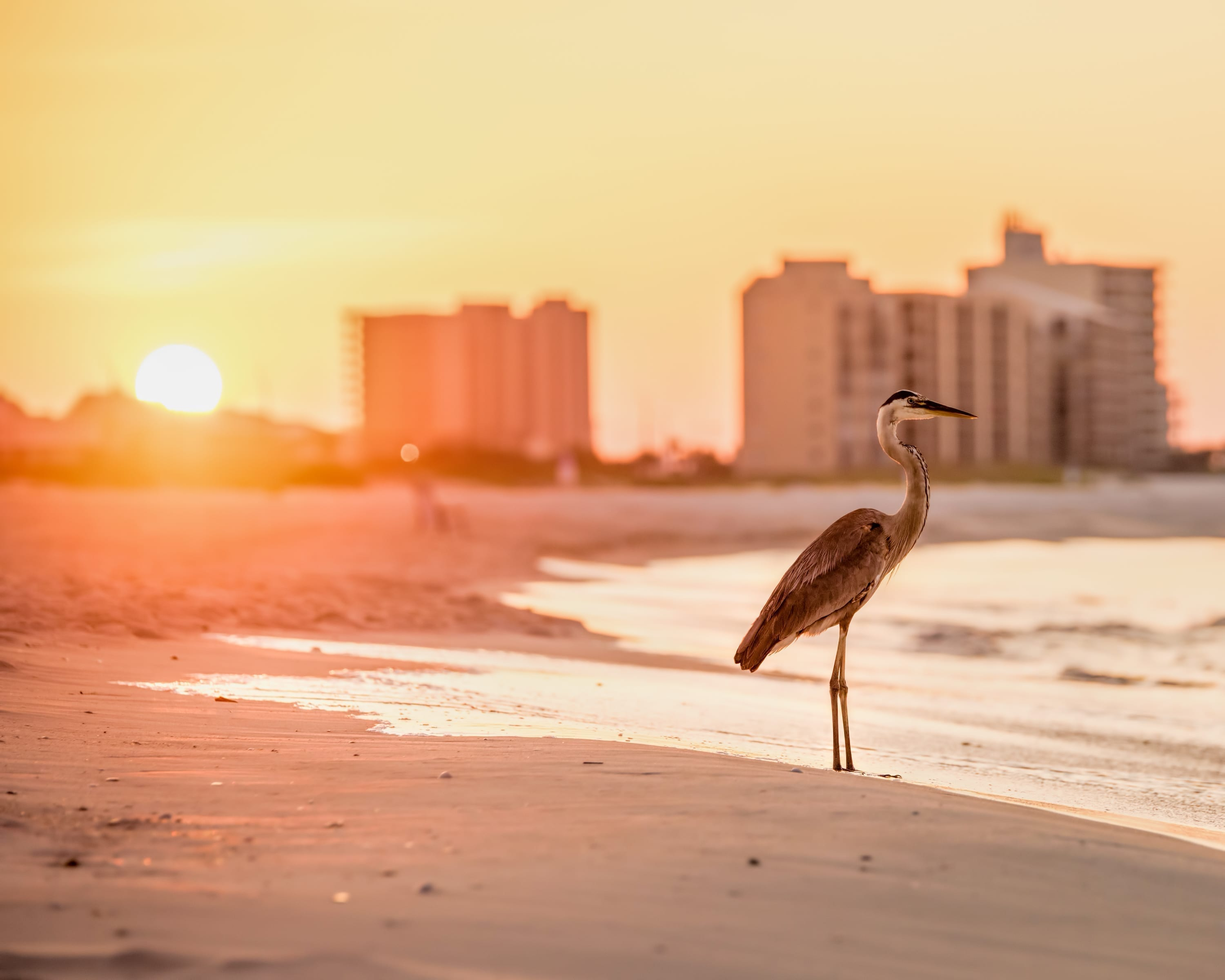 surviving spouse rights alabama bird on beach