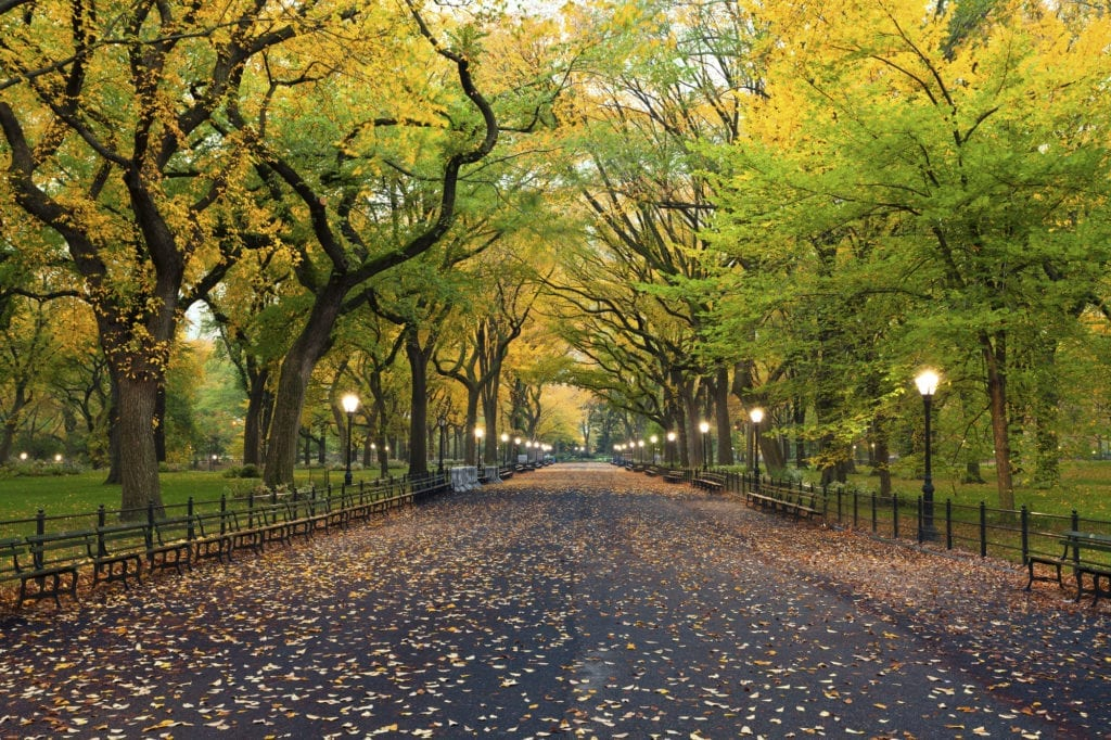can a beneficiary witness a will in New York