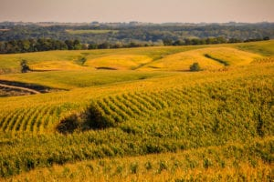interference inheritance Iowa